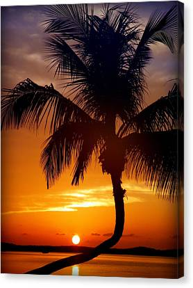 Night Of The Sun Canvas Print by Karen Wiles