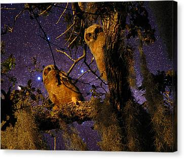 Night Owls Canvas Print by Phil Penne