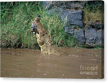 Nile Crocodile Canvas Print by Art Wolfe