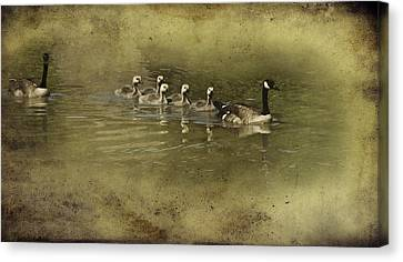 No Time For Stragglers Canvas Print by Diane Schuster