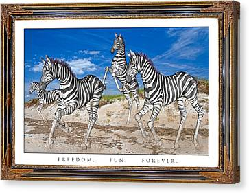No Zoo Zebras Canvas Print by Betsy Knapp