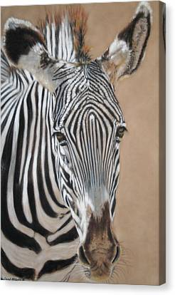 Nomad  Canvas Print by Carol McCarty