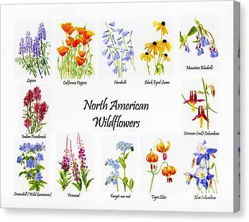 North American Wildflowers Poster II Canvas Print by Sharon Freeman