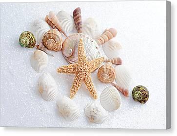 North Carolina Sea Shells Canvas Print by Andee Design