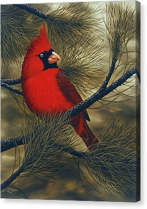Northern Cardinal Canvas Print by Rick Bainbridge
