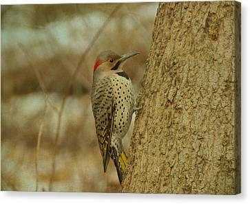 Northern Flicker On Tree Canvas Print by Sandy Keeton