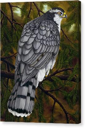 Northern Goshawk Canvas Print by Rick Bainbridge