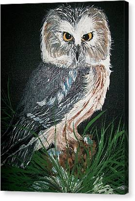 Northern Saw-whet Owl Canvas Print by Sharon Duguay