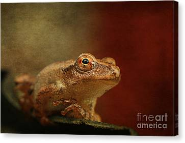 Northern Spring Peeper Canvas Print by Cindi Ressler