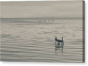 Not All Endings Are Happy Canvas Print by Laurie Search