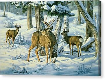 Not This Year - Mule Deer Canvas Print by Paul Krapf