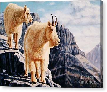 Notice On High Mountain Goats Canvas Print by Tom Chapman