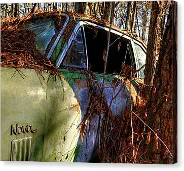 Nova In The Woods Canvas Print by Greg Mimbs