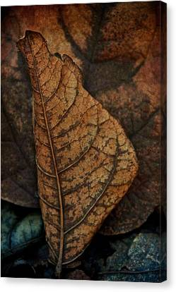 November In Leather Canvas Print by Odd Jeppesen