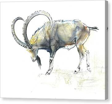 Nubian Ibex Canvas Print by Mark Adlington