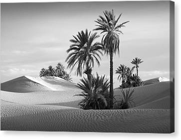 Oasis Canvas Print by Dominique Dubied