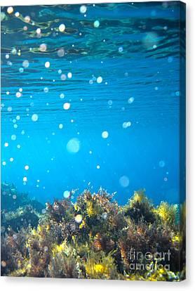 Ocean Garden Canvas Print by Stelios Kleanthous