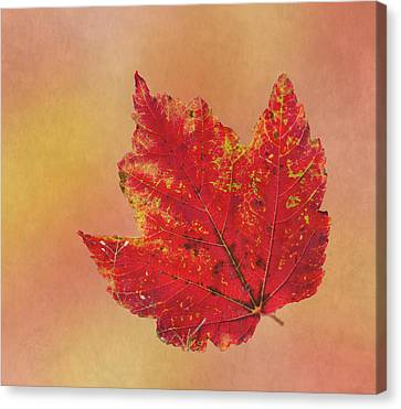 October Glory Canvas Print by Angie Vogel