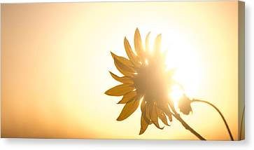 Of Sun And Flowers Canvas Print by Peter Tellone