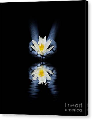 Offering Of The Lotus Canvas Print by Tim Gainey