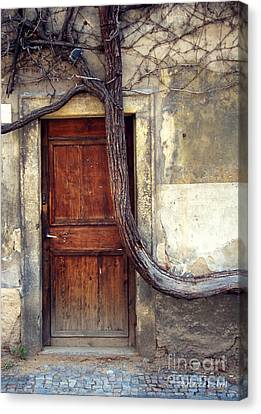 Oh Bended Tree Canvas Print by Rebecca Pickrel