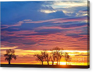 Oh What A Beautiful Morning Canvas Print by James BO  Insogna