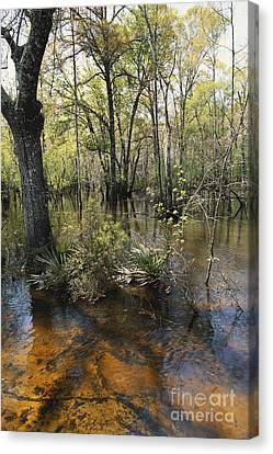 Ohoopee River, Georgia Canvas Print by William H. Mullins