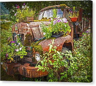 Old Truck Betsy Canvas Print by Mike Reid
