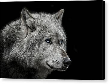 Old Blue Eyes Canvas Print by Paul Neville