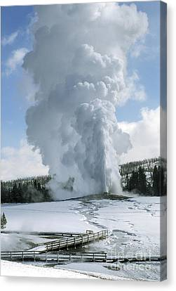 Old Faithful In Her Glory - Yellowstone Canvas Print by Sandra Bronstein