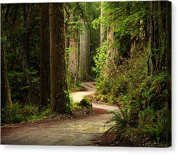 Old Growth Forest Route Canvas Print by Leland D Howard