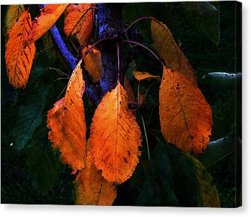 Old Orange Leaves Canvas Print by Scott Hill