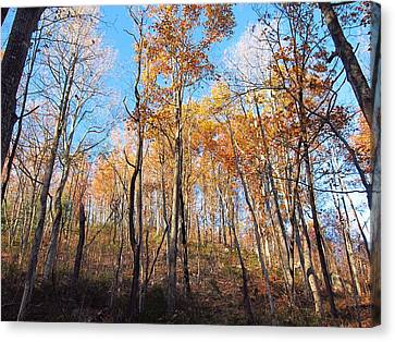 Old Rag Hiking Trail - 121258 Canvas Print by DC Photographer