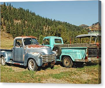 Old Timers Canvas Print by Donna Blackhall