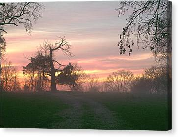 Old Tree At Sunset Canvas Print by Brian Harig