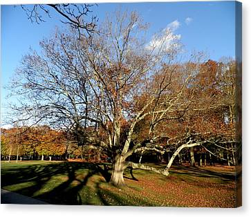 Old Tree In The Park Canvas Print by Kate Gallagher