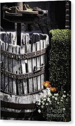 Old Wine Press  Canvas Print by George Oze