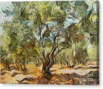 Olive Grove Canvas Print by Dragica  Micki Fortuna