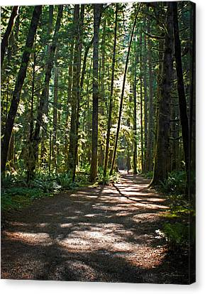 Olympic National Park Forest Path Canvas Print by Julie Magers Soulen