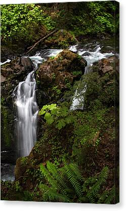 Olympic National Park Canvas Print by Larry Marshall