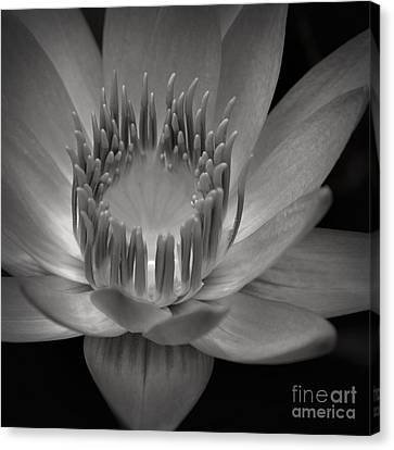 Om Mani Padme Hum Hail To The Jewel In The Lotus Canvas Print by Sharon Mau