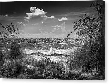 On A Clear Day-bw Canvas Print by Marvin Spates