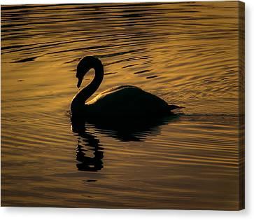 On Golden Pond Canvas Print by Chris Fletcher