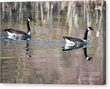 On Golden Pond Canvas Print by Mike Dawson