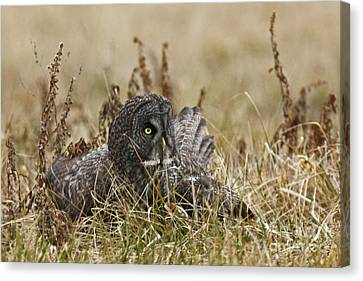 On Guard Canvas Print by Inspired Nature Photography Fine Art Photography