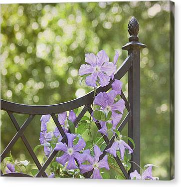 On The Fence Canvas Print by Kim Hojnacki