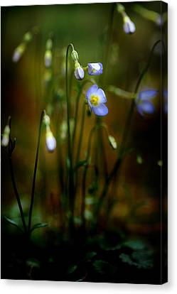 On The Forest Floor Canvas Print by Michael Eingle