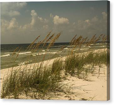 On The Gulf Canvas Print by Maria Suhr