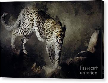 On The Prowl Canvas Print by Shanina Conway