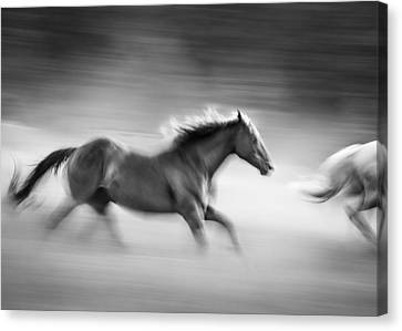 On The Run Canvas Print by Dianne Arrigoni